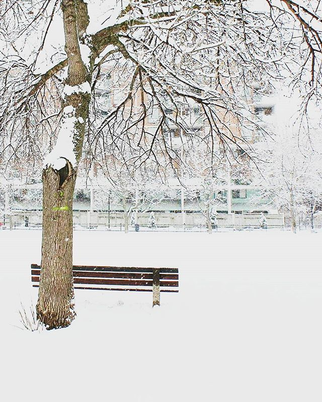 Just a park bench on a snowy day. (part 2) #bench #park #downtown #toronto #vsco #vscocam #winter #snowto #snow