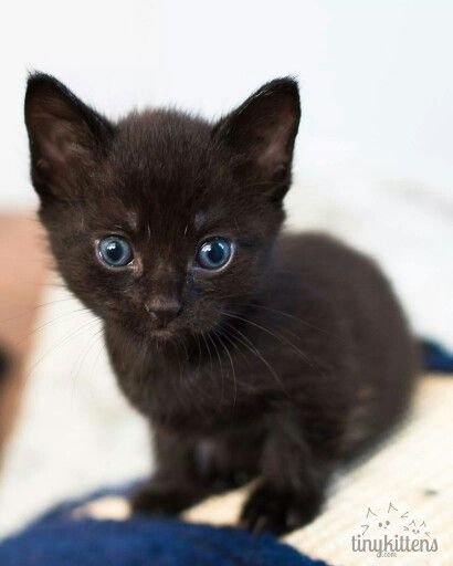 Sweet Like Spooky Animals Kittens And Puppies Cute Animals