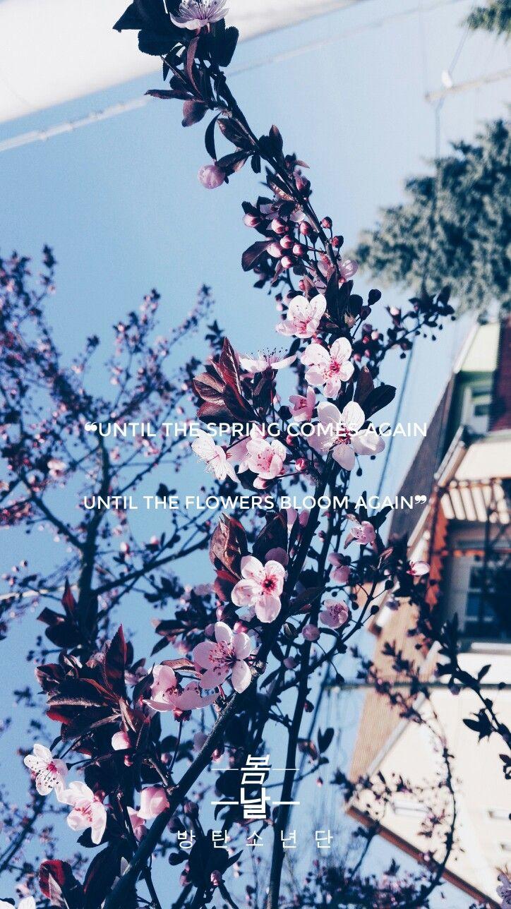 Bts Spring Day Lyrics Bts Pinterest Bts Spring And