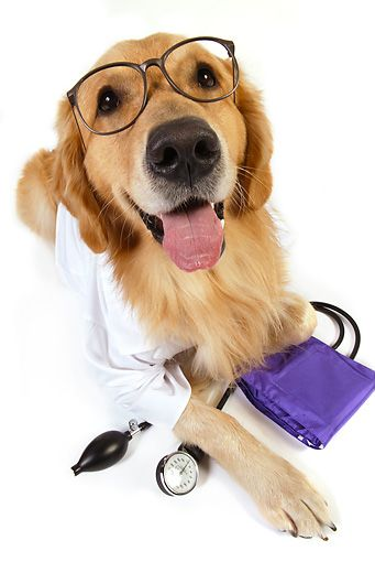 It S Heartworm Medication Time If Your Dog Hasn T Been Tested For Heartworm This Year See Your Veterinarian Heartworm Is Transmitted By Mosquitoes But It Ca
