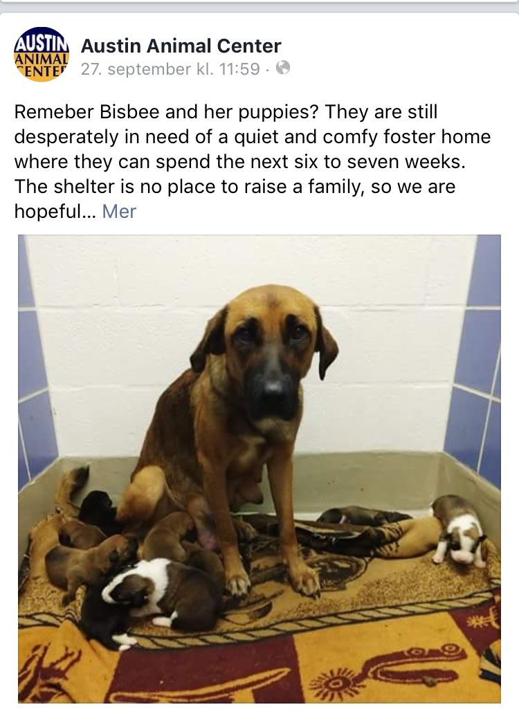 Pin Su Please Help Save These Poor Souls
