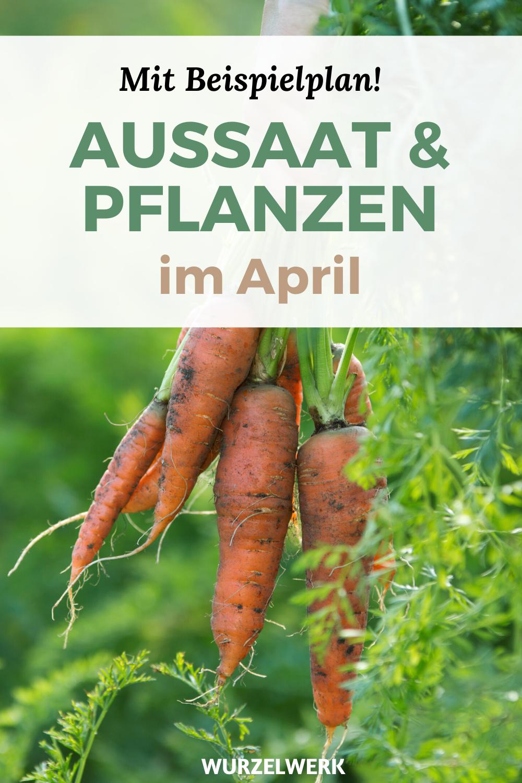 Aussaat & Pflanzen im April + Gemüsegarten-Pflanzplan