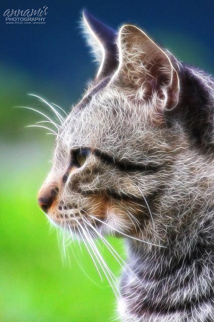 Tanpa Nama Fractal Art Animals Cat Art