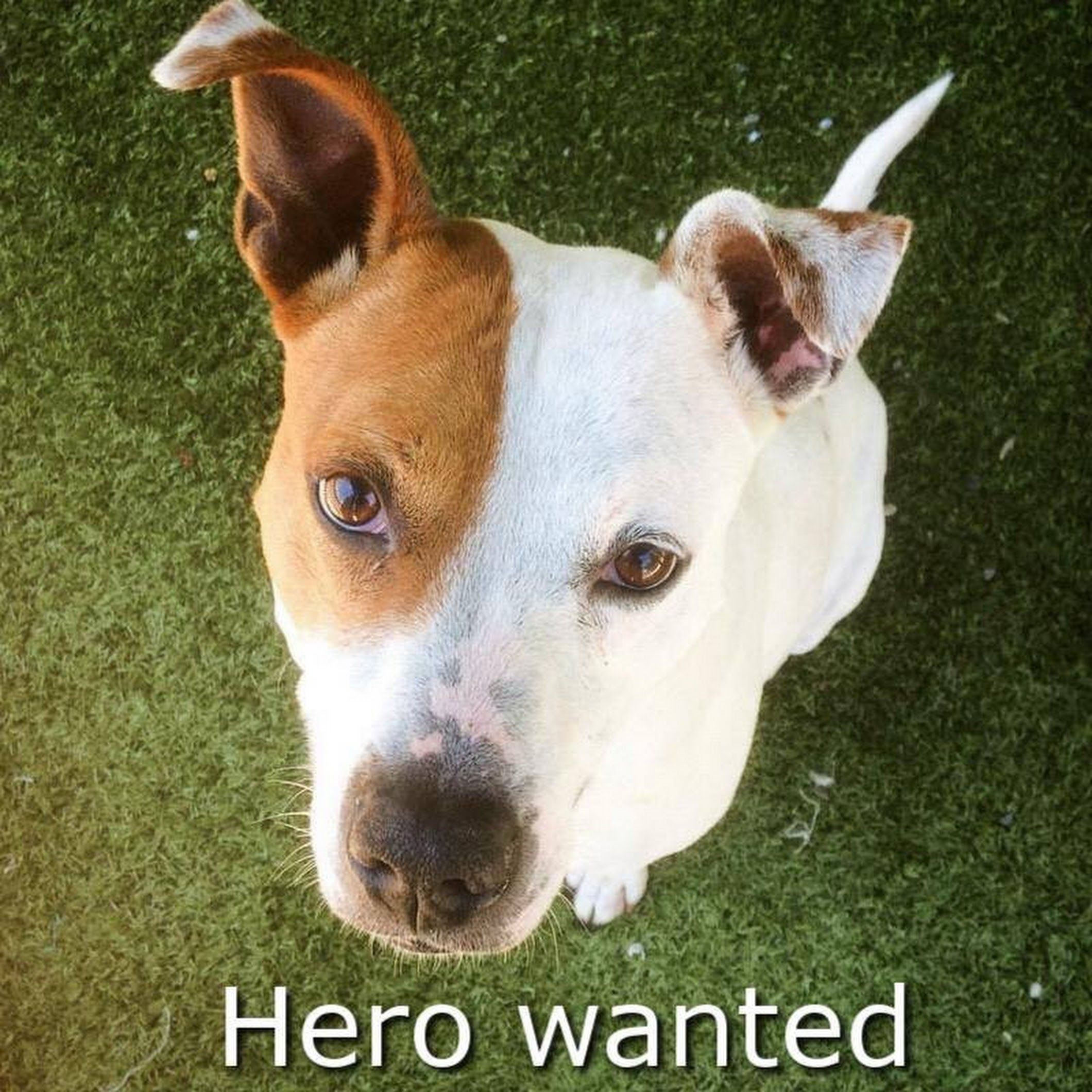 HERO WANTED! Hi, my name is Patches.. will you be my hero