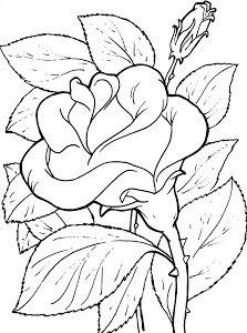 Pin De Noha Madani En Bordados Pintar En Tela Dibujos De Rosas Imágenes Coloridas