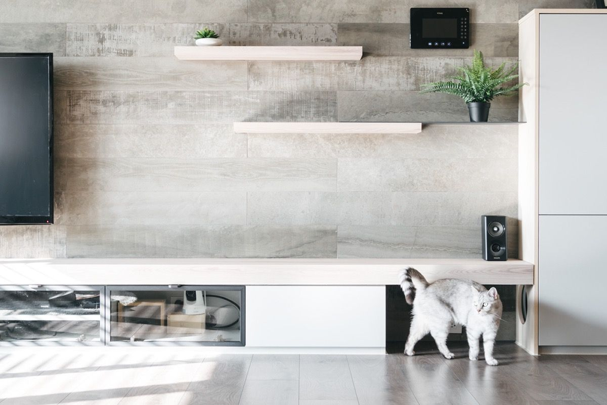 How To Make A Cat Happy: Cat Friendly Home Design | Living Room ...