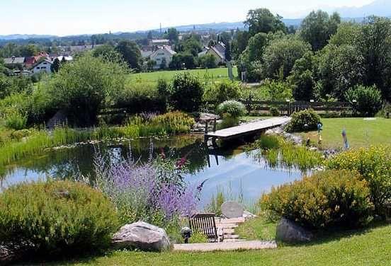 Gartenteich schwimmteich garten teich pflanzen str ucher busch blumen wiese b ume - Gartenideen teich ...