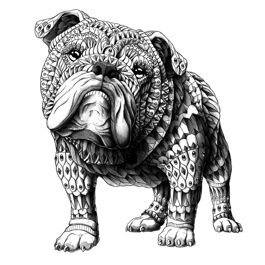 English Bulldog Zentangles English bulldog art