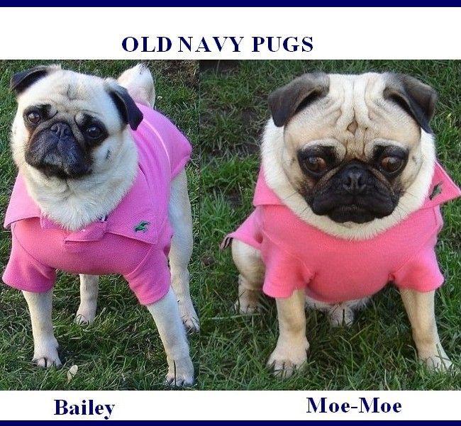 Old Navy Pugs - http://humorandfail.com/old-navy-pugs/