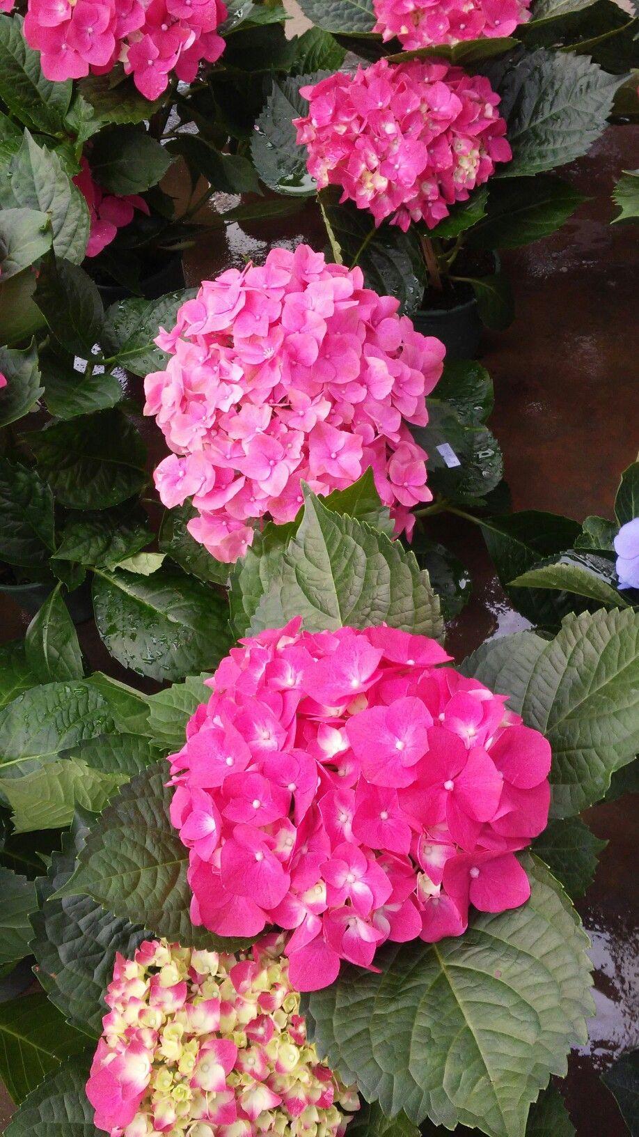 Toda beleza da natureza em forma de flor.