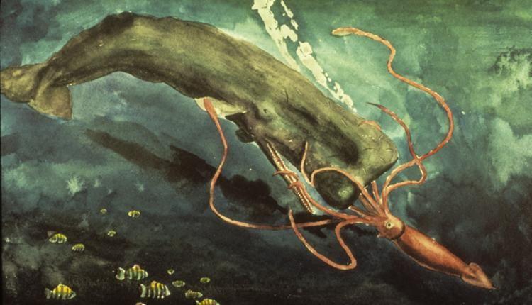 sperm whale vs giant squid by martin g roper giant