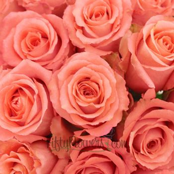 Classic Duet Salmon Pink Rose Fiftyflowers Com Salmon Pink Color Coral Flowers Salmon Pink
