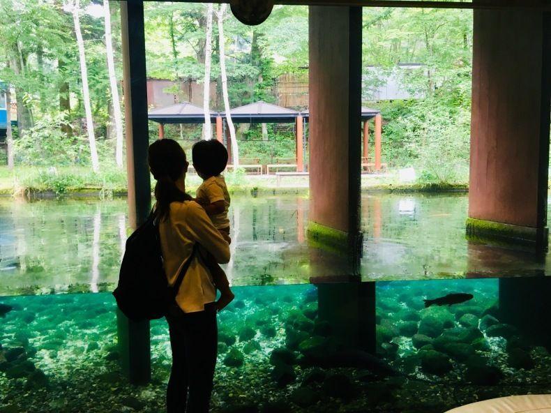 森の中の水族館 山谷彷徨 森 旅行 水族館