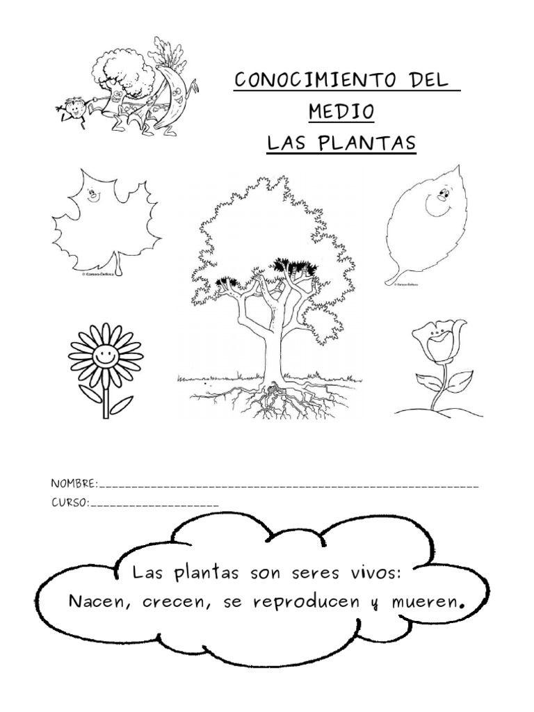 Resultado de imagen de arboles de hoja perenne y caduca 1 for Arboles de hoja caduca y perenne nombres