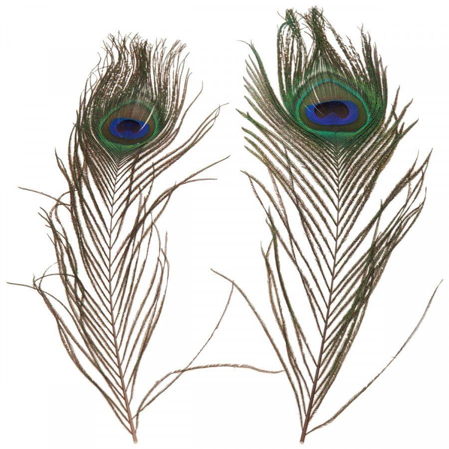 Gevederde Vrienden Terug Van Weggeweest Pauwenveren Peacock Feather Decoratie Animalinspired Animal Animalprint Interior I Pauw Pauwenveer Decoratie