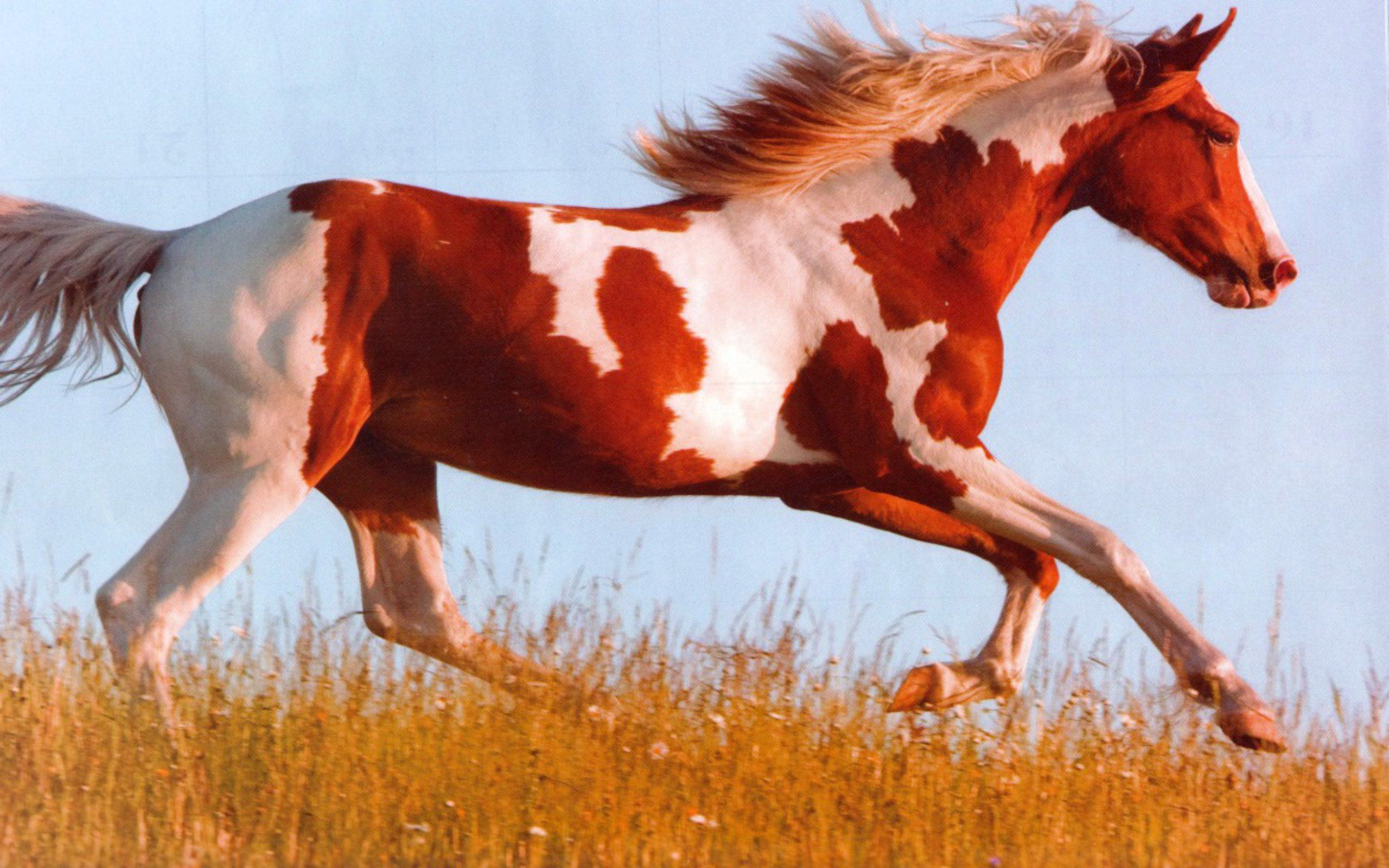 I love horses like these, I find they look a little rebel.