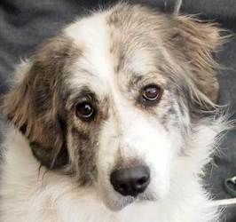 Adopt Karma in MA - adopted on | Adorable and Adoptable