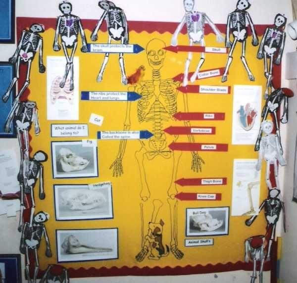 Primary Teaching Displays, Primary
