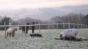 Partridge Farm - Tiverton