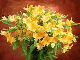 Картинки по запросу цветы изощренный принт   Фото цветов ...