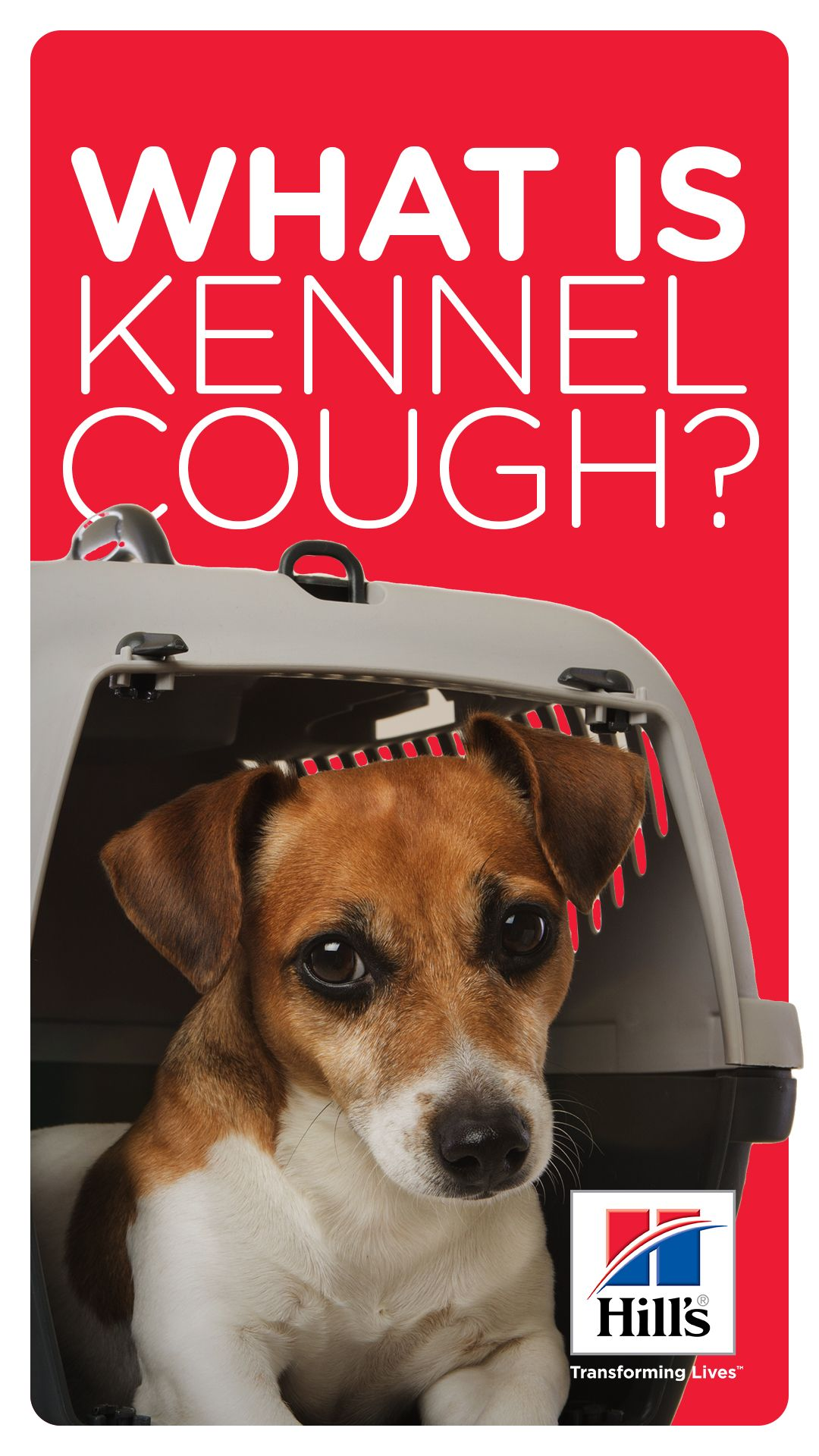 Kennel Cough In Dogs Cats Does My Pet Have It Hill S Pet Dog Coughing Kennel Dog Care