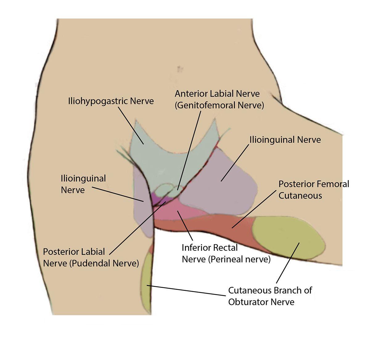 Sacral Nerve Root Compression Google Search Foot Massage
