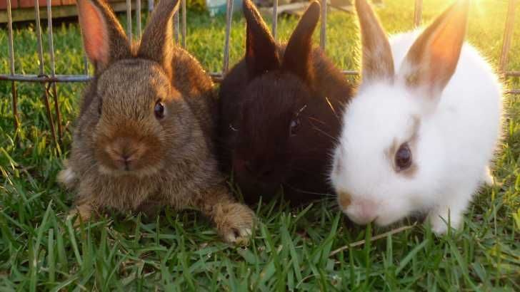 Pet Unicorns For Sale That Are Real Baby Rabbits For