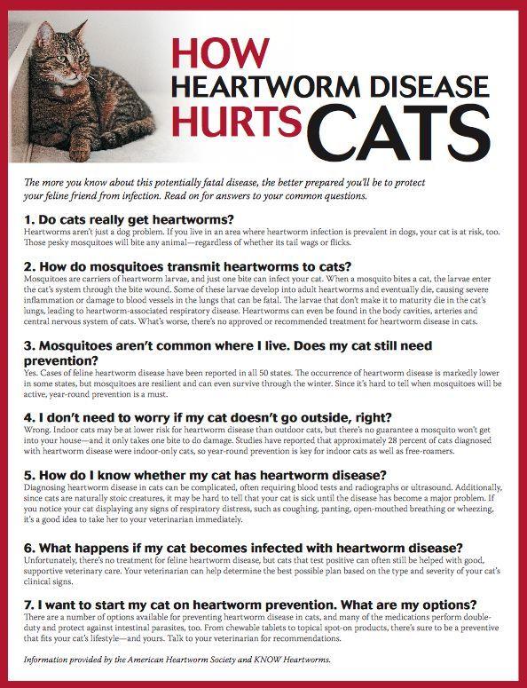 Pin by Wanda Twellman on Cat Health Tips Heartworm