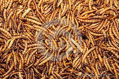 25++ Lava worms ideas in 2021