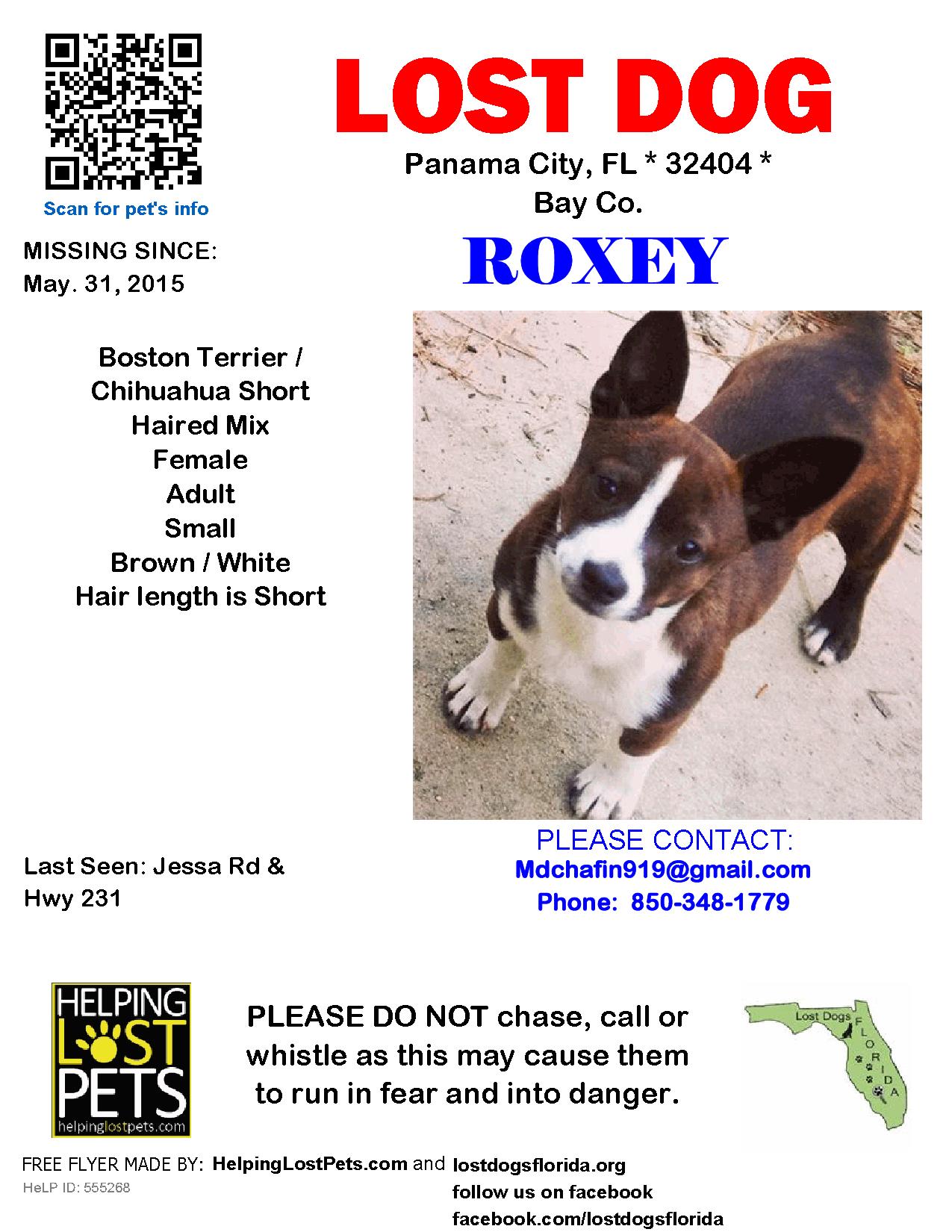 Lost Dog Female Panama City Fl Usa 32404 Losing A Dog Panama City Panama Dogs