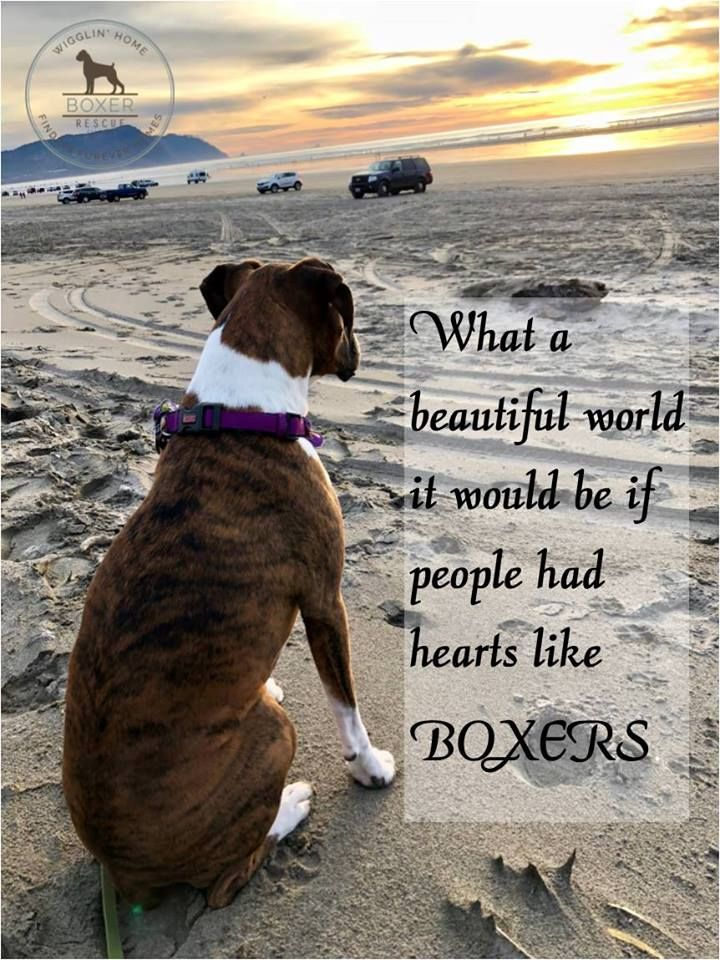 Boxers will be your best friend! Check out our available