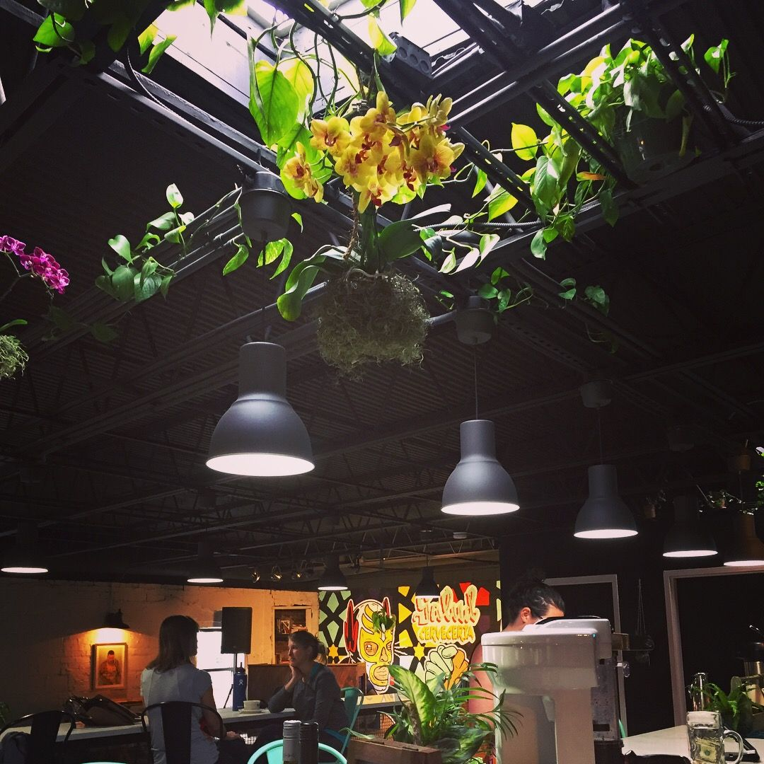 Skylight and hanging plants at Trade and Lore CLT Indoor