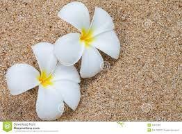 Risultati immagini per fiore sabbia
