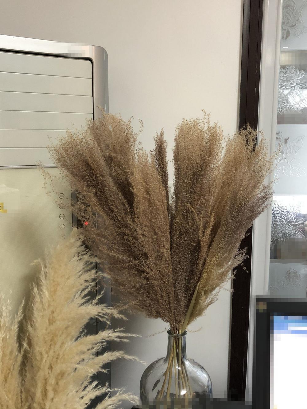 10pcs Natural Dried Pampas Grass Reeds Home Flower Bunch Bouquet Decoration