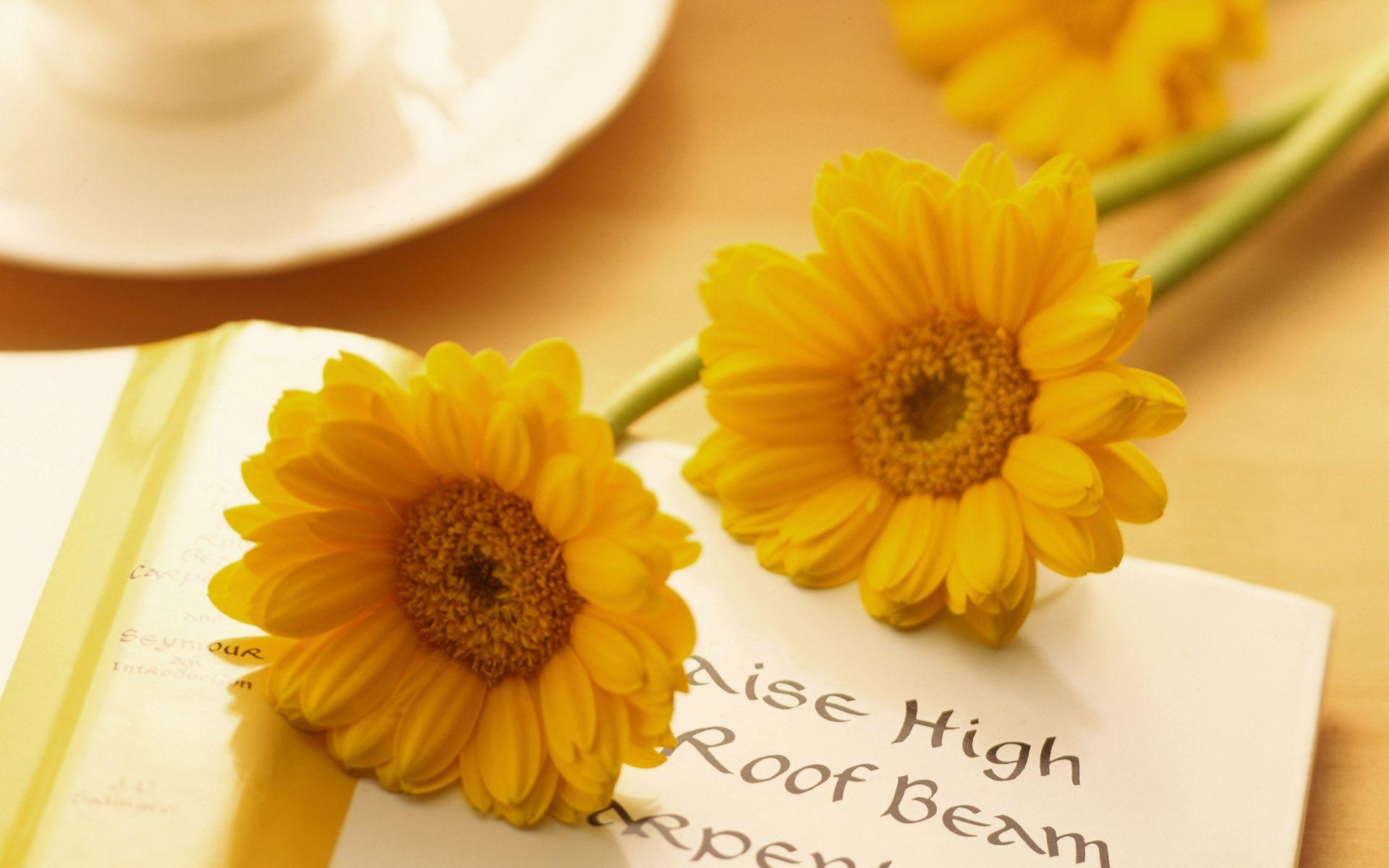 Pin by vonnie davis on my cottage dreamssunshine chateau flowers izmirmasajfo
