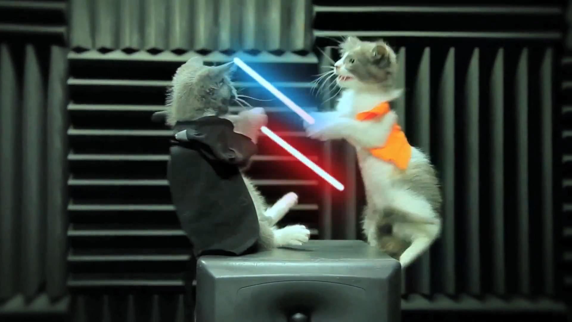 子猫がライトセーバーで戦う動画 ジェダイの子猫たちの逆襲 Jedi Kittens Strike Back スター ウォーズに登場するライトセーバーを持って 子猫たちが戦う動画 ジェダイの子猫たち ネコ好きの人以外でも おお これは かわいい となったかと思い