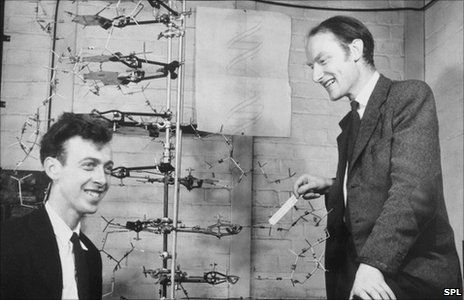 Watson And Crick Dna Documentaries Dna Model
