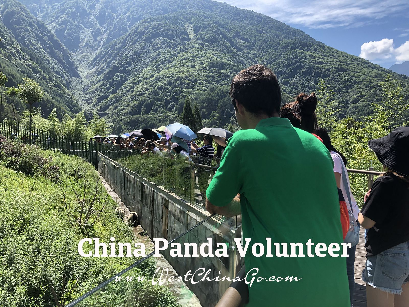 china panda volunteer
