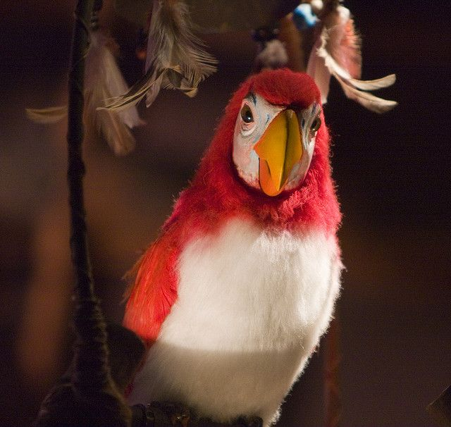 ach du lieber fritz happiest place tiki room disneyland rh pinterest com Animation Enchanted Tiki Room Disneyland Enchanted Tiki Room Birds