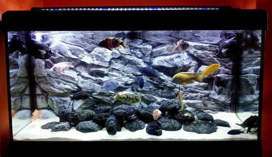 Details About 3d Dark Grey Rock Solid Background Vivarium For Aquarium Fish Tank Polyresin Aquarium Fish Tank Aquarium Aquarium Fish