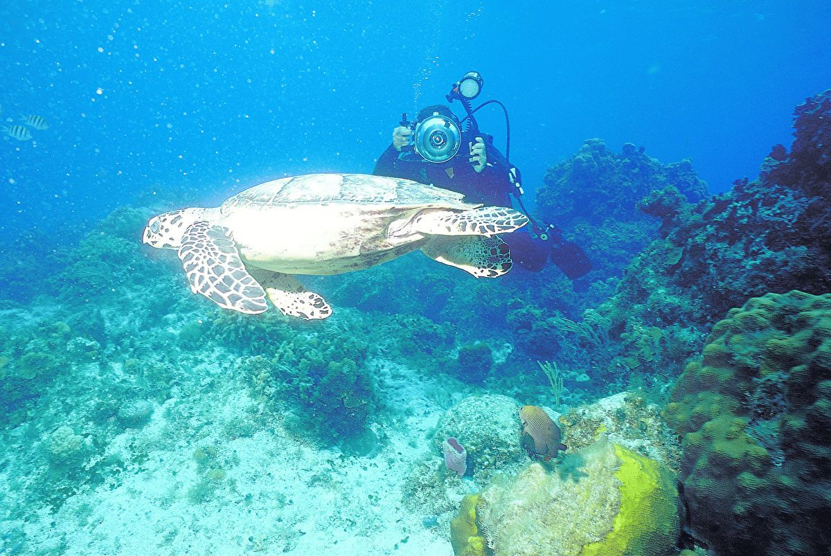 Scuba Diving In Jamaica: Montego Bay & Ocho Rios Hotspots