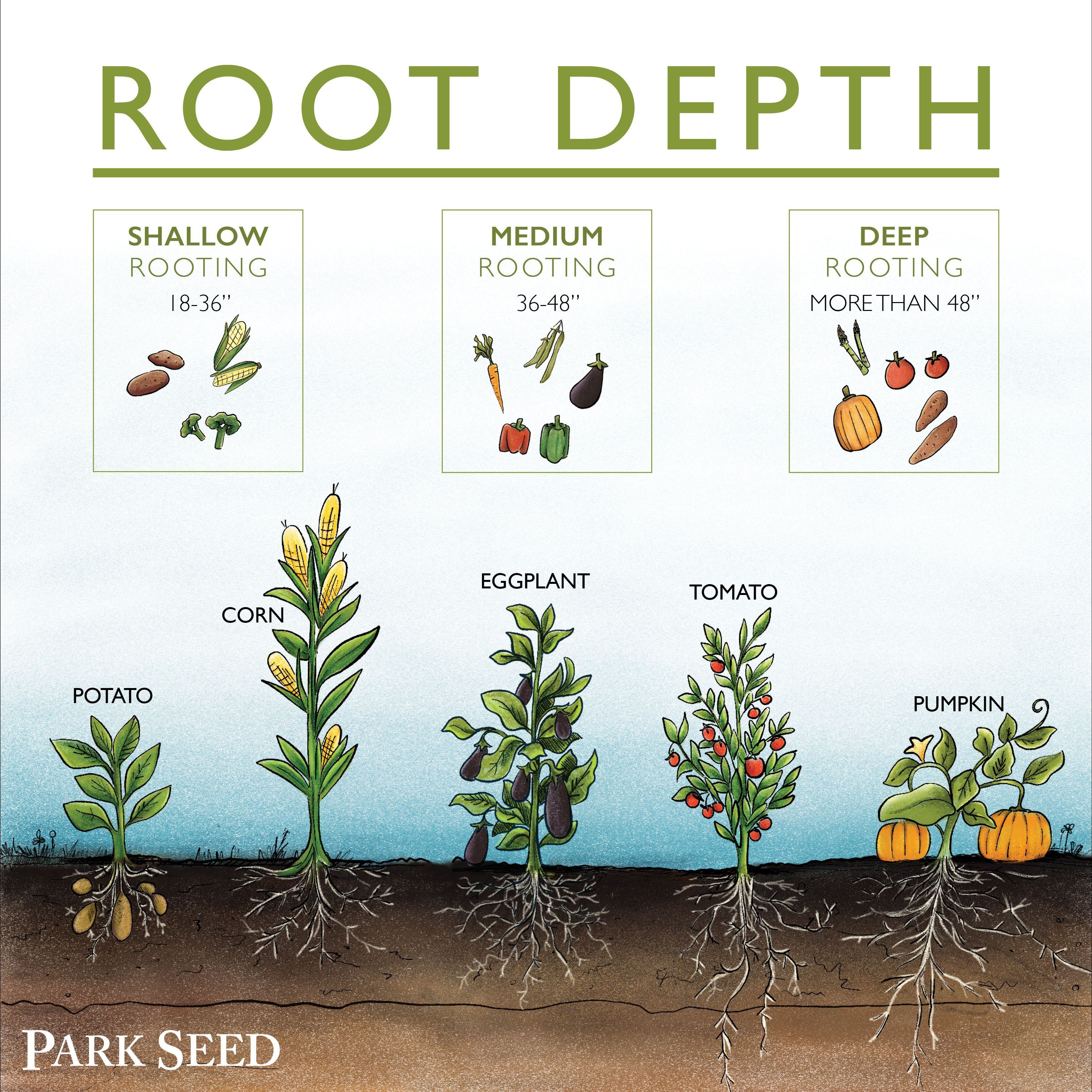 Soil Roots And So Much More Official Blog Of Park Seed Gardening For Beginners Garden Pests Vegetable Garden