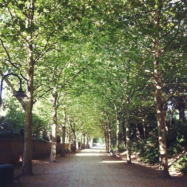 Het stadspark in het centrum van Leuven zit in de zomer vol met studenten. Je kan er picknicken, sporten, zonnen, 'socialisen' en veel meer. ☀️