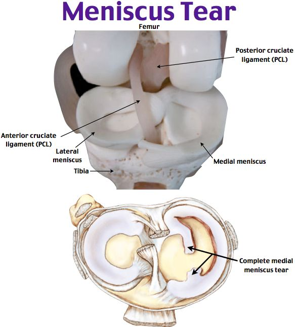 Rosh Review | Medical | Pinterest | Anatomía