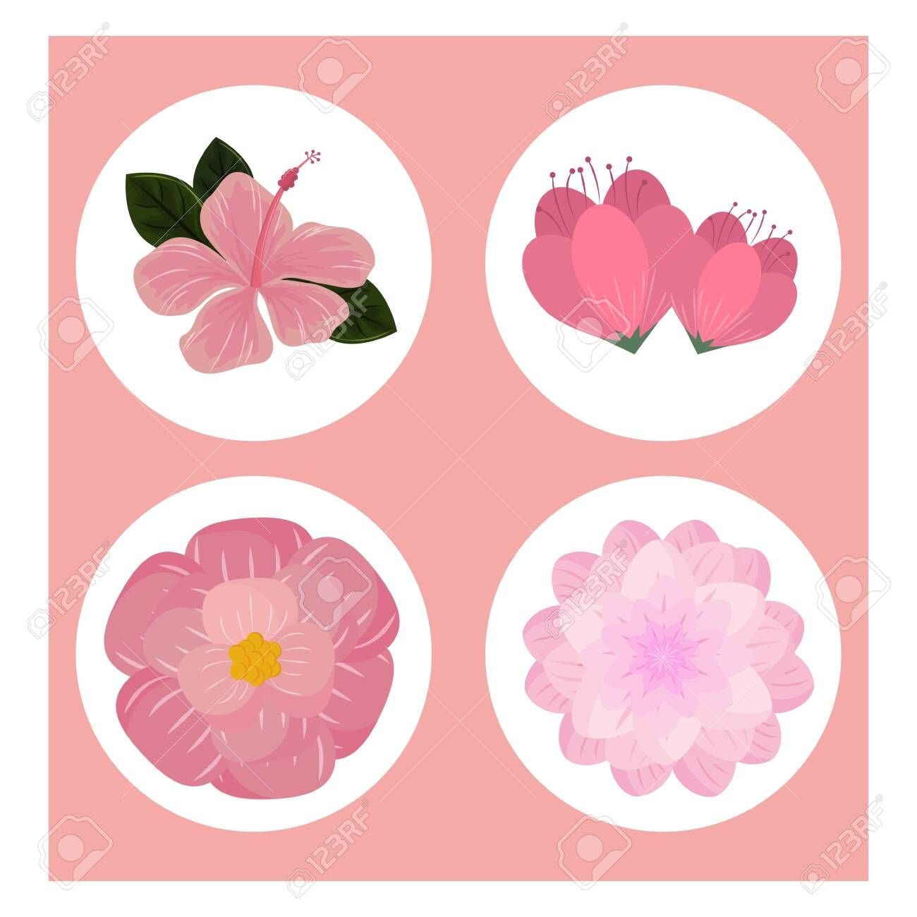 Flowers round icons set over pink background vector illustration graphic design