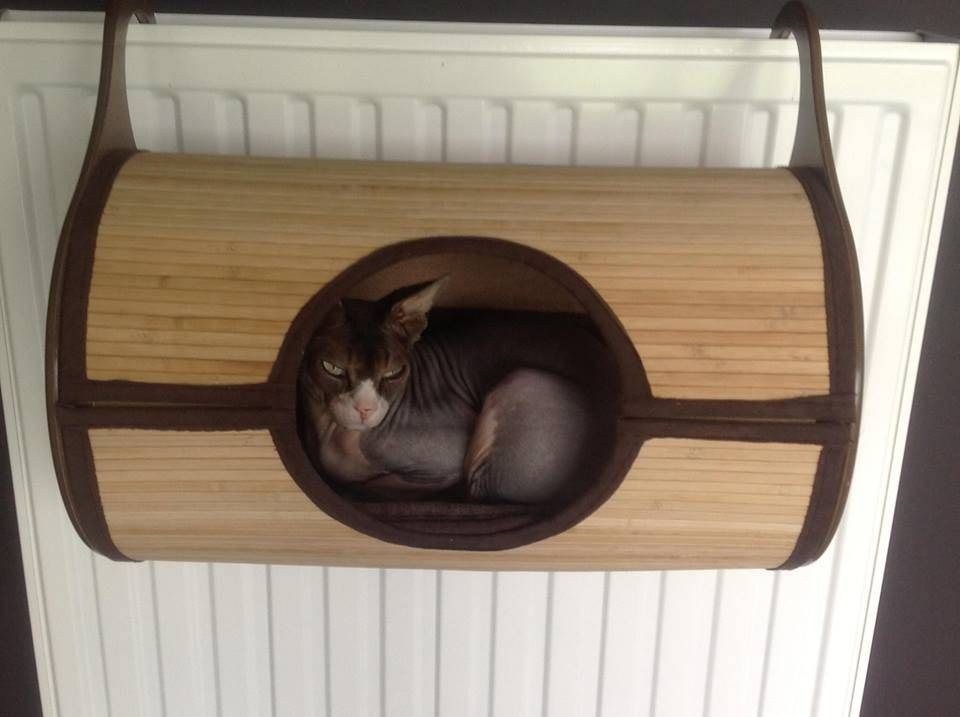 bamboo radiator bed   hammock cat   cats will love the new radiator beds which work bamboo radiator bed   hammock cat   cats will love the new      rh   pinterest