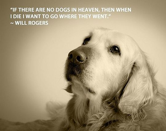 33 Inspirational Dog Quotes Dog Heaven Dog Quotes Animal Quotes
