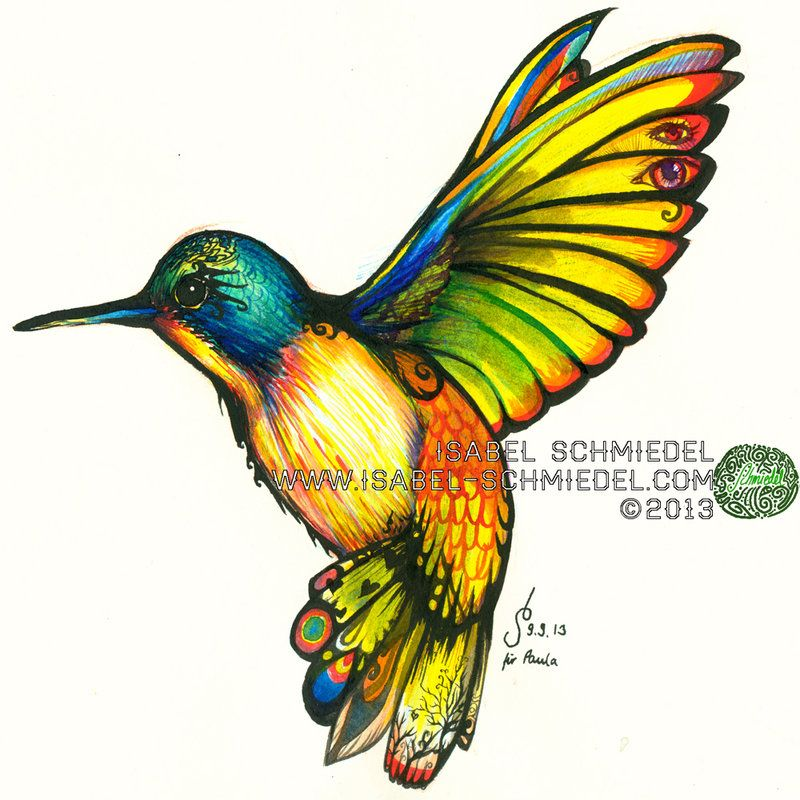 hummingbirds drawings in color google search - Color Drawings