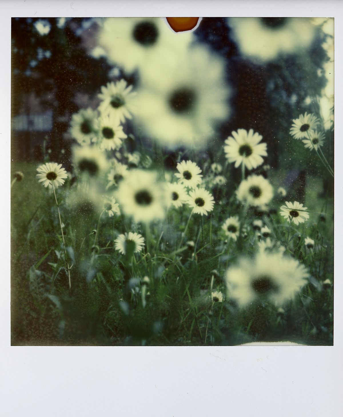 Great shot on Polaroid SX-70 with Impossible Color-Shade film.