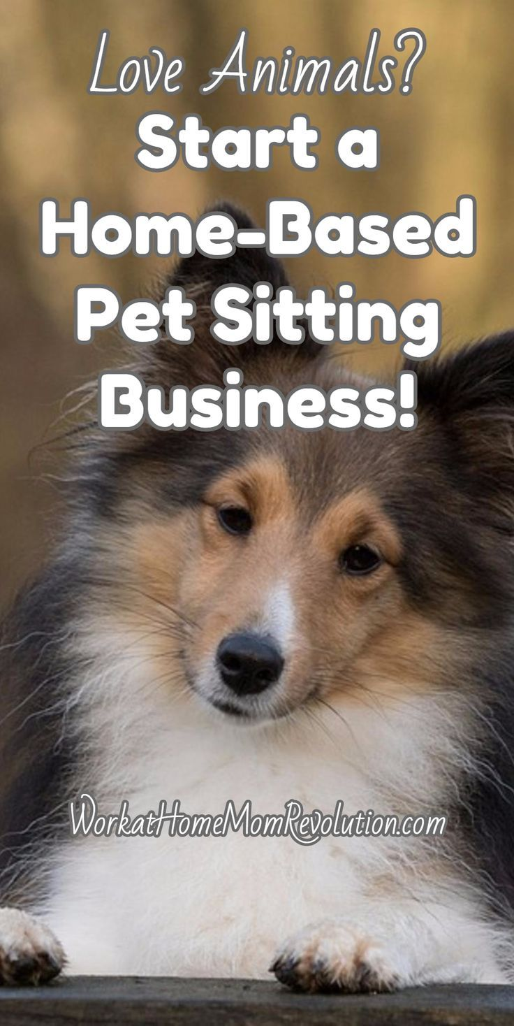 Work at Home How to Start Your Own Pet Sitting Business